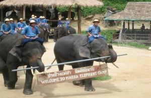 In het Maesa Elephant Camp worden dagelijks 3 show gegeven.
