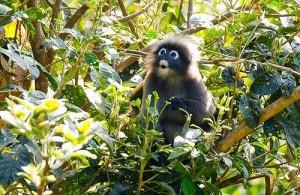 In het Kaeng Krachan National Park leven veel dieren.