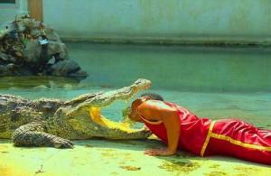 In de Crocodile Farm worden dagelijks diverse spannende shows opgevoerd.