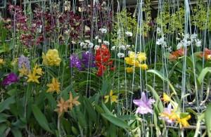 Veel tropische bloemen en planten op de Thewet bloemenmarkt.