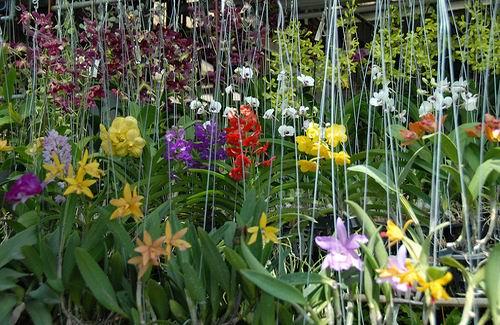 Tropische Bloemen Kopen Veel Tropische Bloemen en