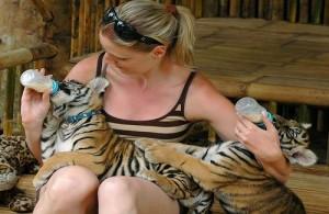 Als je wilt kun je in de Tiger Zoo spelen en knuffelen met de welpen.