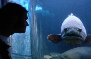 In het Samui Aquarium leven diverse soorten tropische vissen en andere waterdieren.
