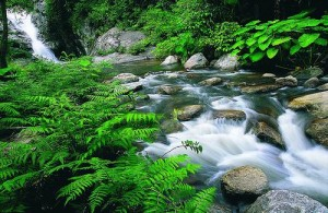 De Hin Lad waterval wordt omgeven door palmen en klimplanten.