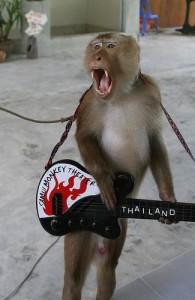 De apen in het Samui Monkey Theatre geven dagelijks een drietal vermakelijke shows.