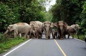 Olifanten behoren tot de bewoners van het Khao Yai National Park.